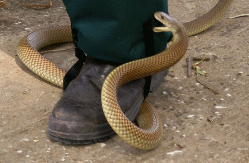 how to keep snakes away from your property australia